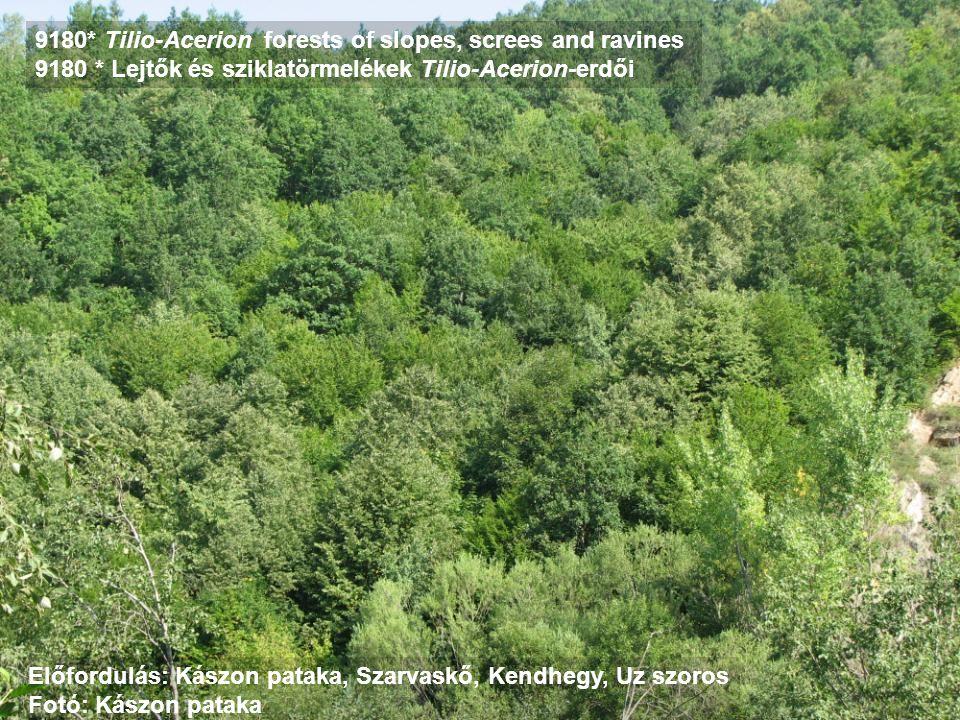 9180* Tilio-Acerion forests of slopes, screes and ravines 9180 * Lejtők és sziklatörmelékek Tilio-Acerion-erdői Előfordulás: Kászon pataka, Szarvaskő,