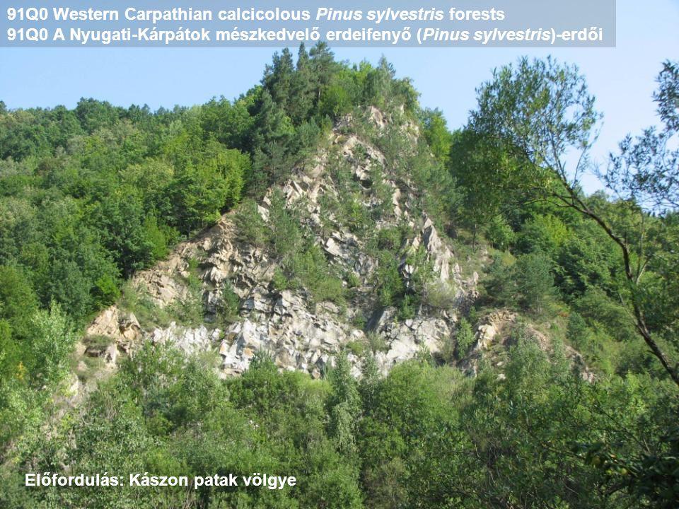 91Q0 Western Carpathian calcicolous Pinus sylvestris forests 91Q0 A Nyugati-Kárpátok mészkedvelő erdeifenyő (Pinus sylvestris)-erdői Előfordulás: Kász