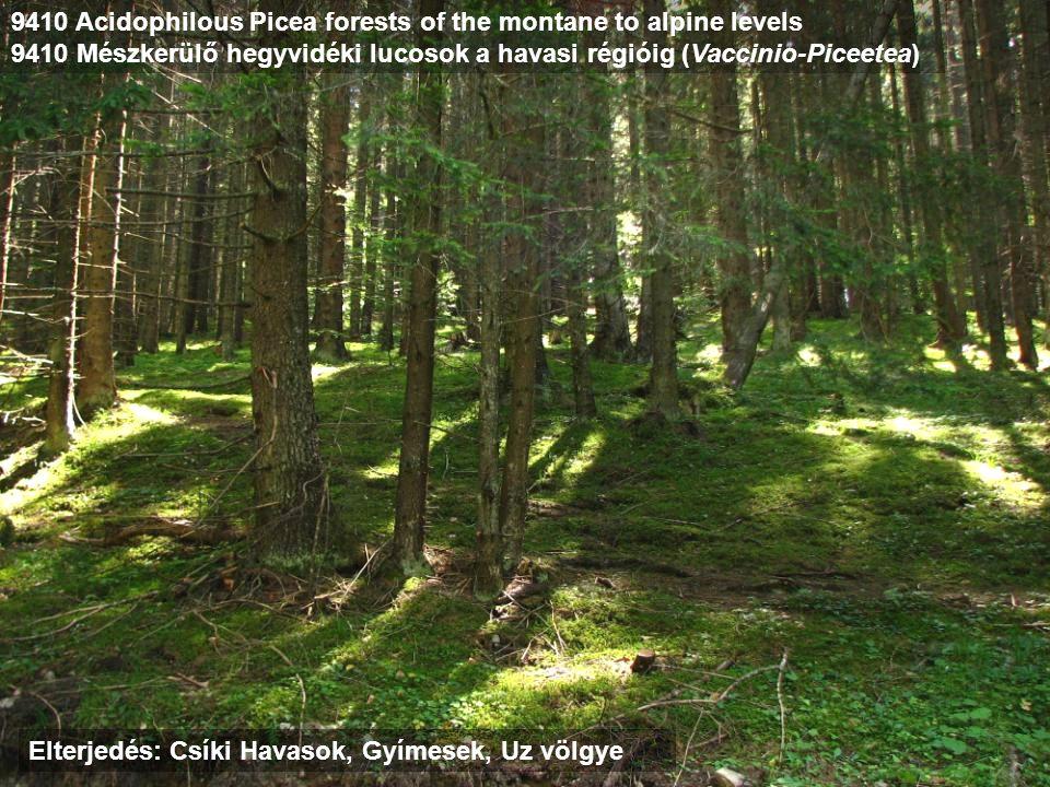 9410 Acidophilous Picea forests of the montane to alpine levels 9410 Mészkerülő hegyvidéki lucosok a havasi régióig (Vaccinio-Piceetea) Elterjedés: Cs