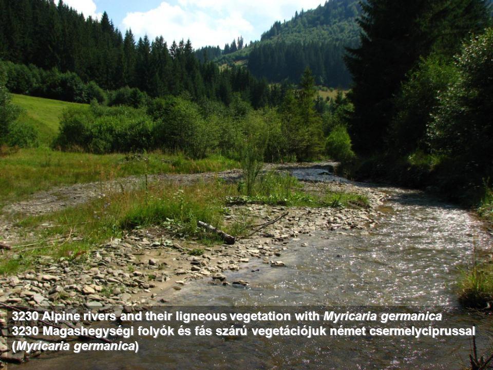3230 Alpine rivers and their ligneous vegetation with Myricaria germanica 3230 Magashegységi folyók és fás szárú vegetációjuk német csermelyciprussal