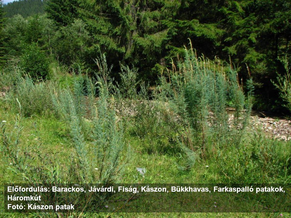 4060 Alpine and boreal heaths 4060 Havasi és boreális fenyérek A hamvas áfonya (Vaccinium uliginosum ssp.