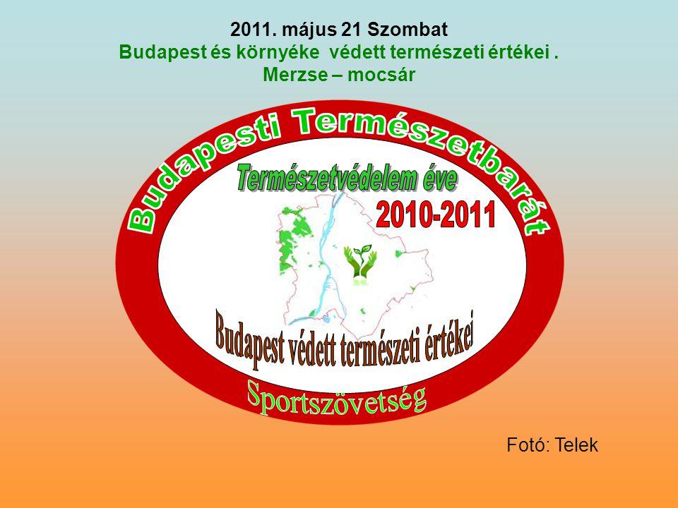 2011. május 21 Szombat Budapest és környéke védett természeti értékei. Merzse – mocsár Fotó: Telek