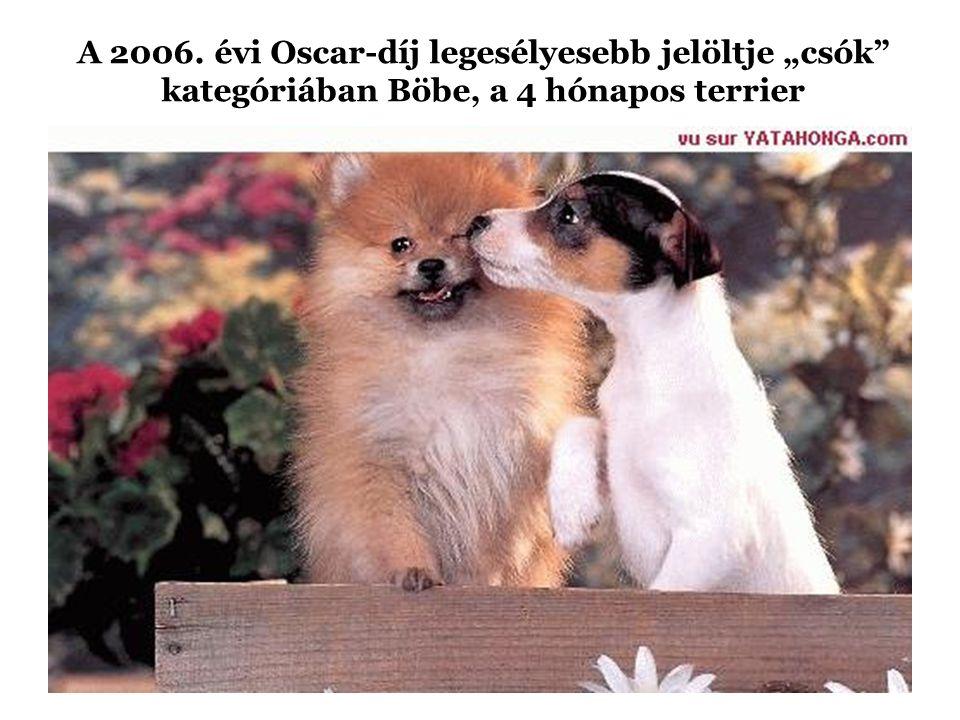 """A 2006. évi Oscar-díj legesélyesebb jelöltje """"csók kategóriában Böbe, a 4 hónapos terrier"""