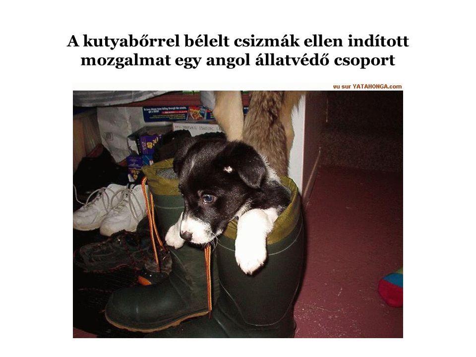 A kutyabőrrel bélelt csizmák ellen indított mozgalmat egy angol állatvédő csoport