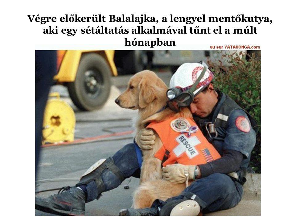 Végre előkerült Balalajka, a lengyel mentőkutya, aki egy sétáltatás alkalmával tűnt el a múlt hónapban