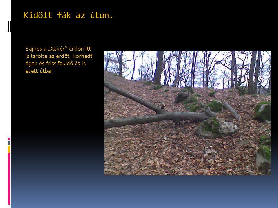 """Kidőlt fák az úton. Sajnos a """"Xavér"""" ciklon itt is tarolta az erdőt, korhadt ágak és friss fakidőlés is esett útba!"""