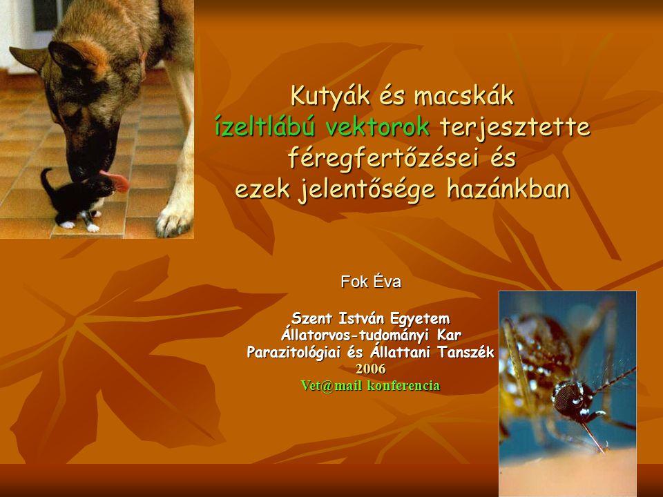 Kutyák és macskák ízeltlábú vektorok terjesztette féregfertőzései és ezek jelentősége hazánkban Fok Éva Szent István Egyetem Állatorvos-tudományi Kar Parazitológiai és Állattani Tanszék 2006 Vet@mail konferencia