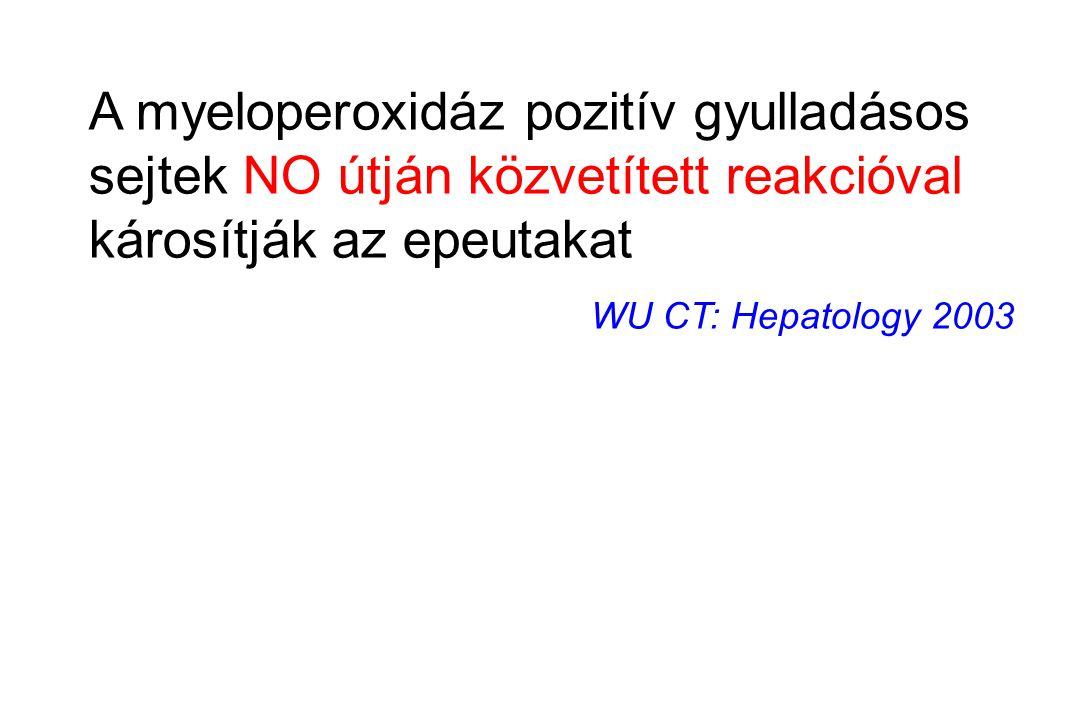A myeloperoxidáz pozitív gyulladásos sejtek NO útján közvetített reakcióval károsítják az epeutakat WU CT: Hepatology 2003