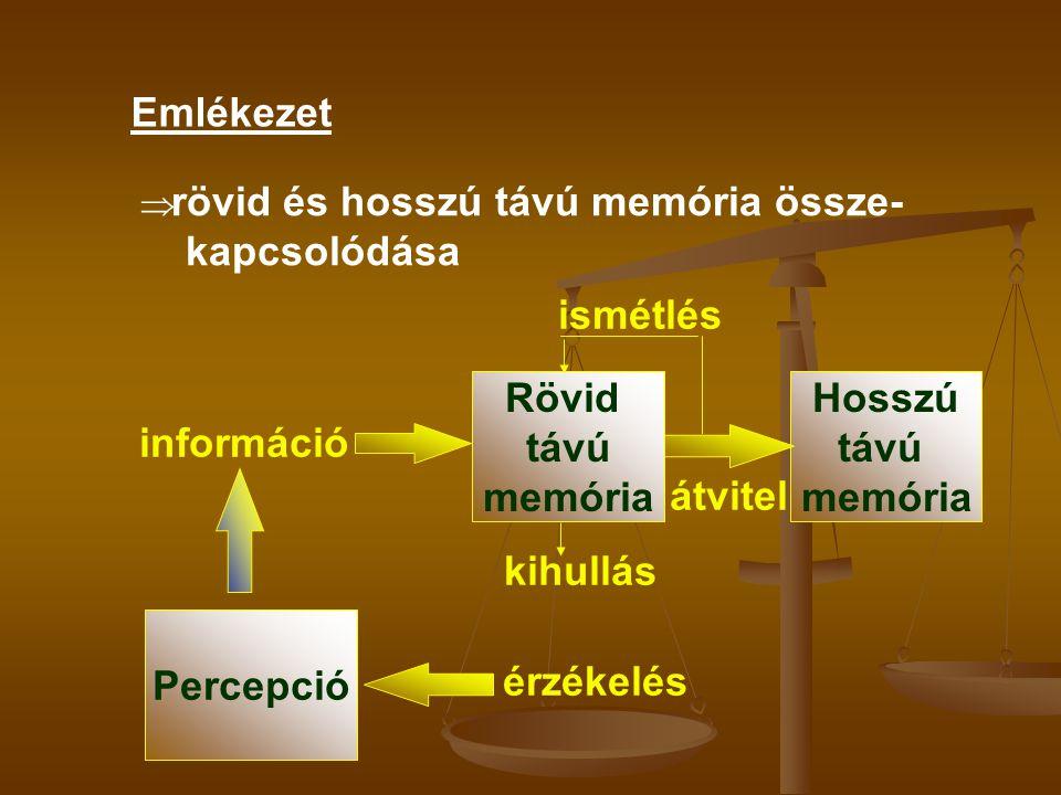 Emlékezet  rövid és hosszú távú memória össze- kapcsolódása Rövid távú memória Hosszú távú memória információ átvitel ismétlés kihullás Percepció érz