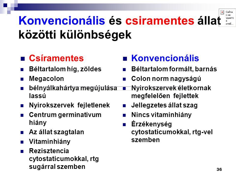 36 Konvencionális és csiramentes állat közötti különbségek  Csíramentes  Béltartalom híg, zöldes  Megacolon  bélnyálkahártya megújulása lassú  Ny