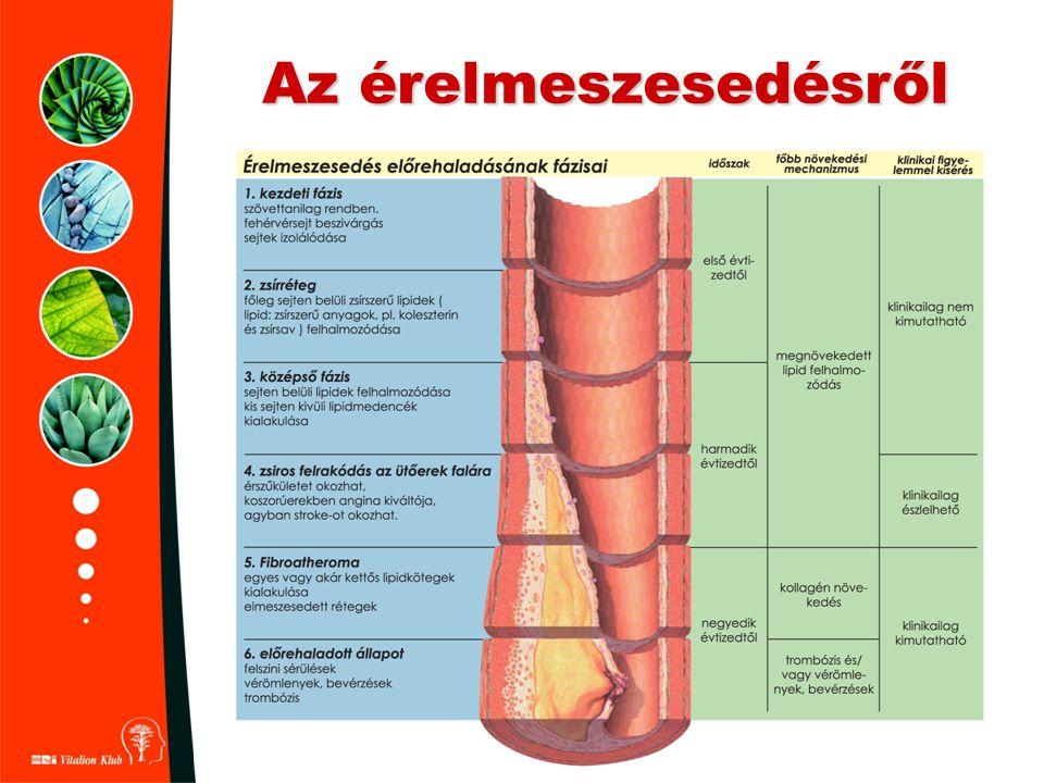 HRI Vitalion tabletta Összetevők: - csipkebogyó - bodzavirág - hibiszkusz - narancs - szőlő - alma