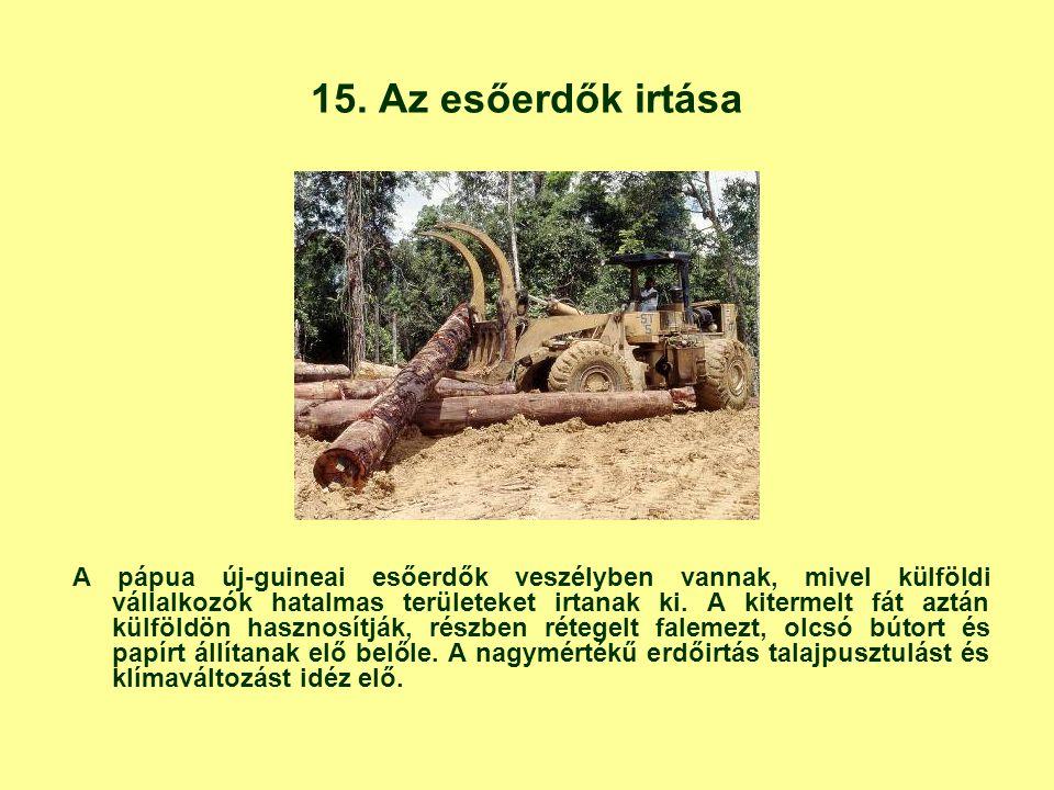 15. Az esőerdők irtása A pápua új-guineai esőerdők veszélyben vannak, mivel külföldi vállalkozók hatalmas területeket irtanak ki. A kitermelt fát aztá