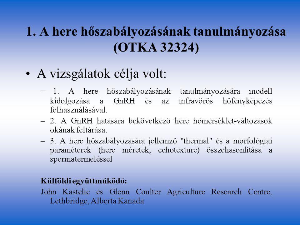 1. A here hőszabályozásának tanulmányozása (OTKA 32324) •A vizsgálatok célja volt: – 1. A here hőszabályozásának tanulmányozására modell kidolgozása a