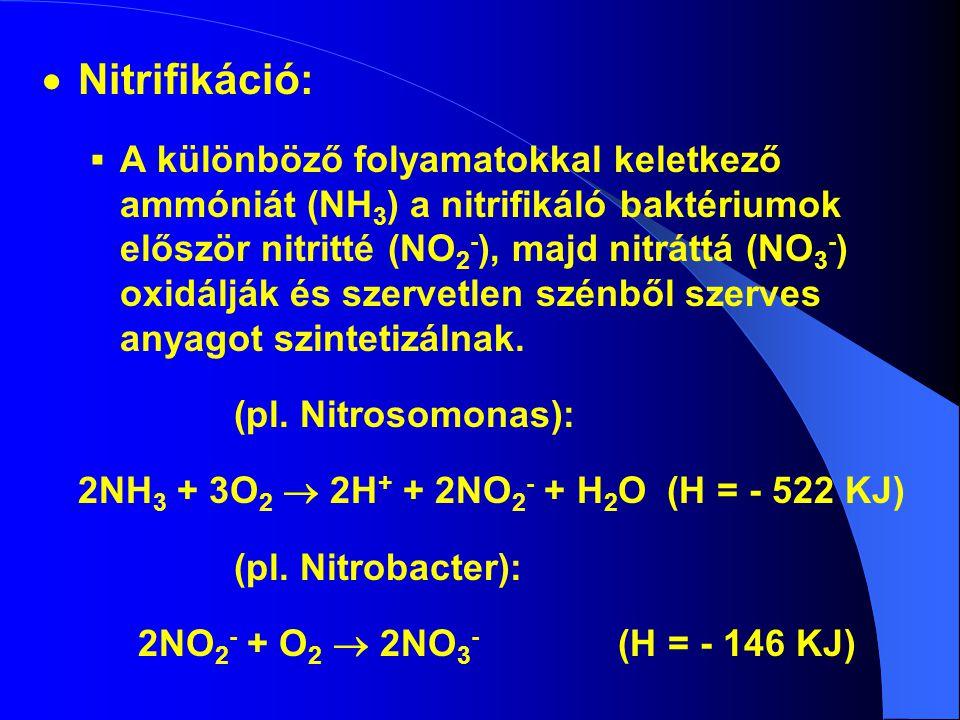  Nitrifikáció:  A különböző folyamatokkal keletkező ammóniát (NH 3 ) a nitrifikáló baktériumok először nitritté (NO 2 - ), majd nitráttá (NO 3 - ) o