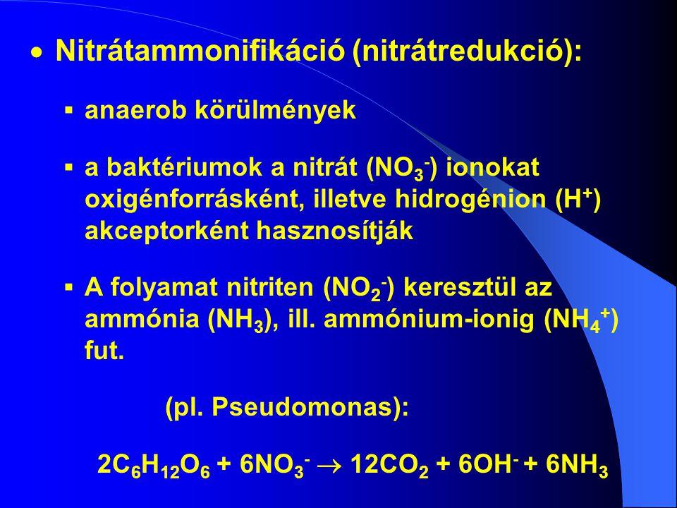  Nitrátammonifikáció (nitrátredukció):  anaerob körülmények  a baktériumok a nitrát (NO 3 - ) ionokat oxigénforrásként, illetve hidrogénion (H + )