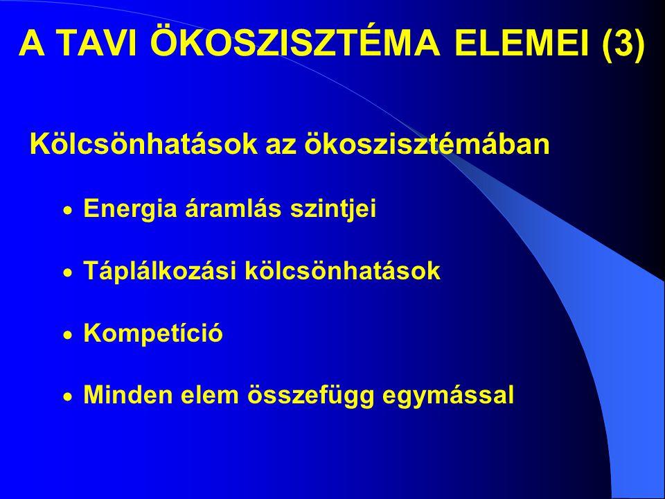 A TAVI ÖKOSZISZTÉMA ELEMEI (3) Kölcsönhatások az ökoszisztémában  Energia áramlás szintjei  Táplálkozási kölcsönhatások  Kompetíció  Minden elem ö