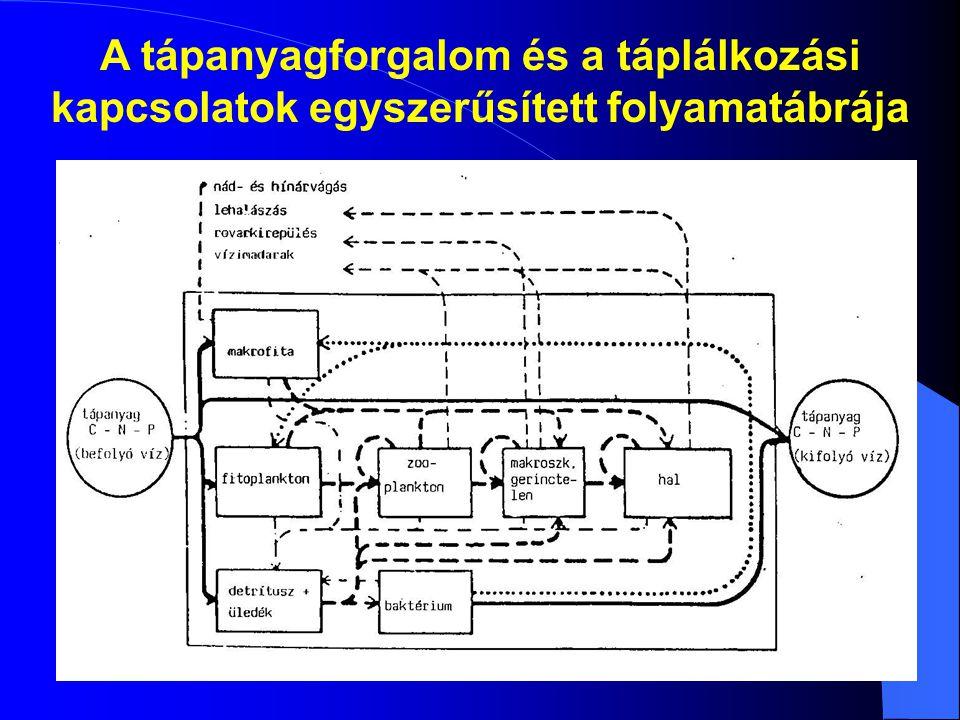 A tápanyagforgalom és a táplálkozási kapcsolatok egyszerűsített folyamatábrája