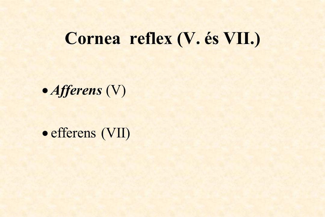Cornea reflex (V. és VII.)  Afferens (V)  efferens (VII)
