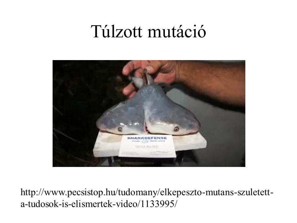 Túlzott mutáció http://www.pecsistop.hu/tudomany/elkepeszto-mutans-szuletett- a-tudosok-is-elismertek-video/1133995/