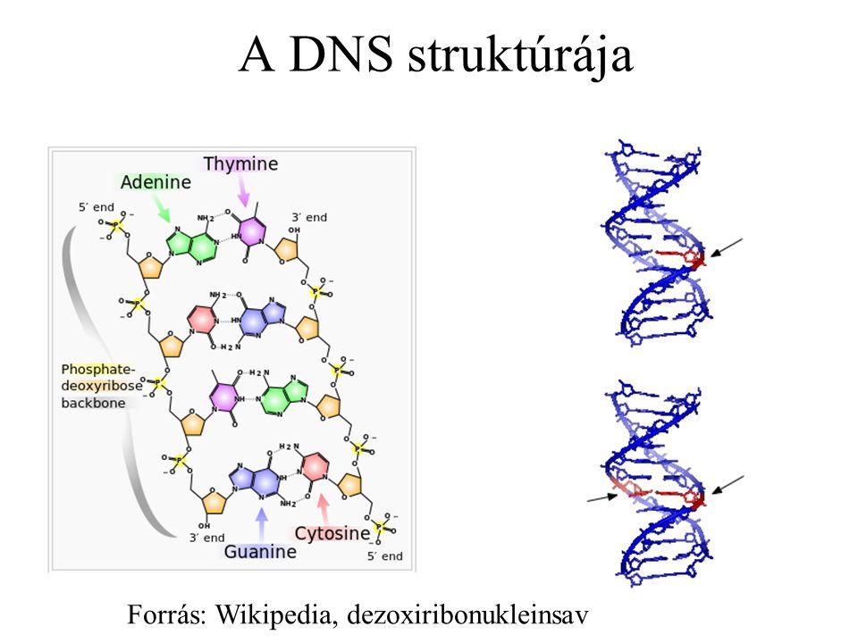 Bináris sztringek mutációja 1001010101 1000010101 1001010101 1101000001 Csak egy gén mutálódik A gének egymástól függetlenül mutálódnak P1 O1 P1 O1