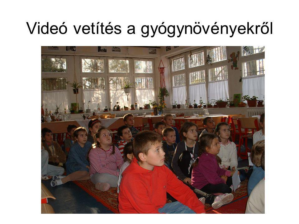 Videó vetítés a gyógynövényekről