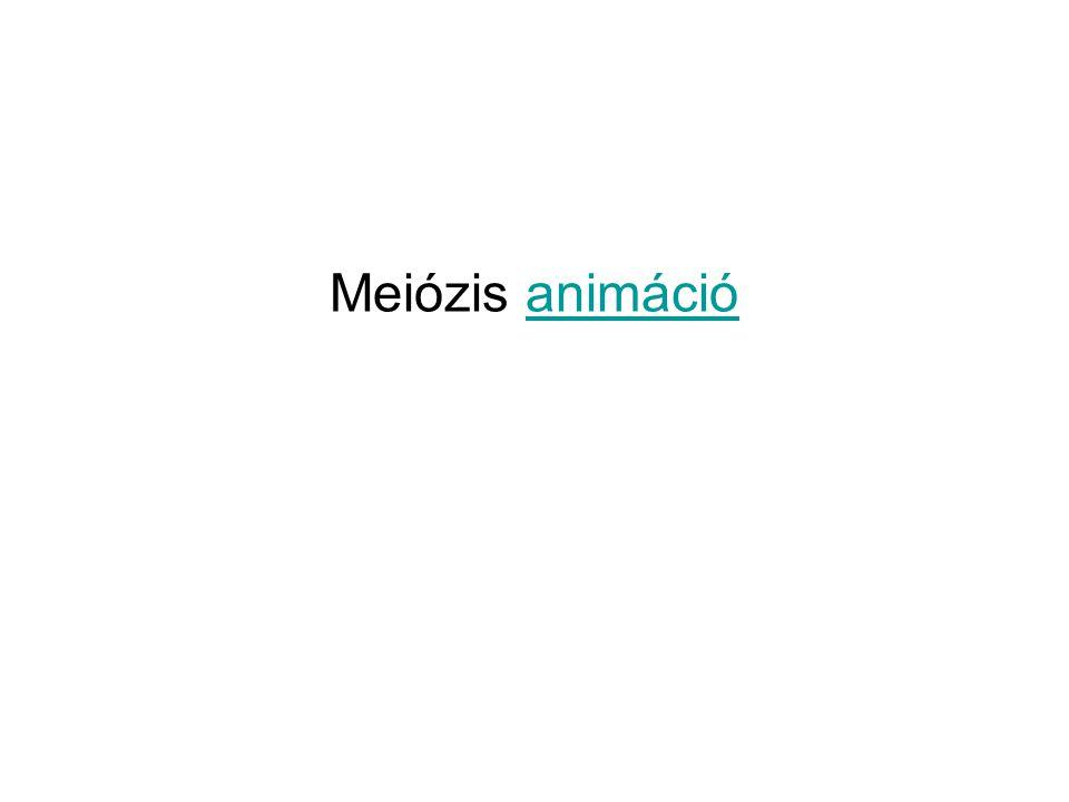 Meiózis animációanimáció