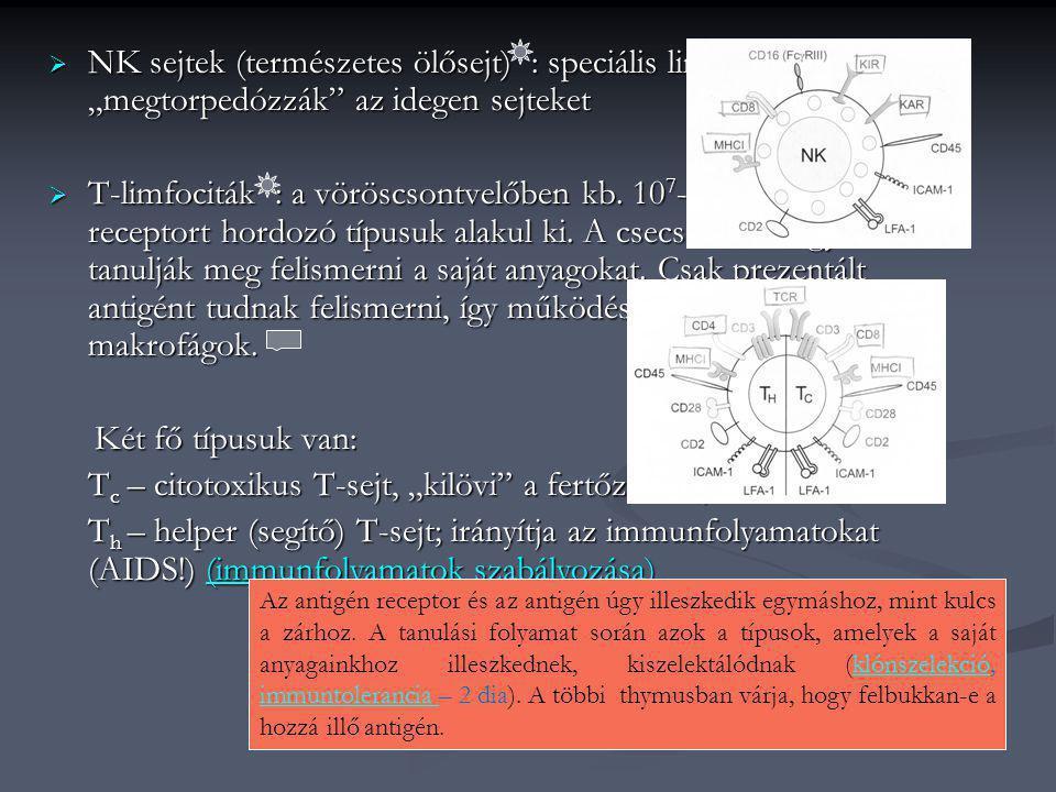 """ NK sejtek (természetes ölősejt) : speciális limfociták, """"megtorpedózzák"""" az idegen sejteket  T-limfociták : a vöröscsontvelőben kb. 10 7 -10 9 féle"""