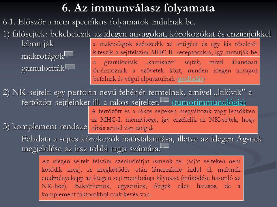 6. Az immunválasz folyamata 6.1. Először a nem specifikus folyamatok indulnak be. 1) falósejtek: bekebelezik az idegen anyagokat, kórokozókat és enzim