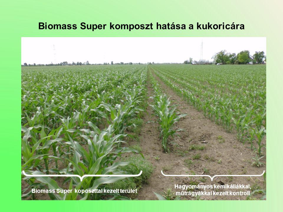 Biomass Super komposzt hatása a kukoricára Hagyományos kemikáliákkal, műtrágyákkal kezelt kontroll Biomass Super koposzttal kezelt terület