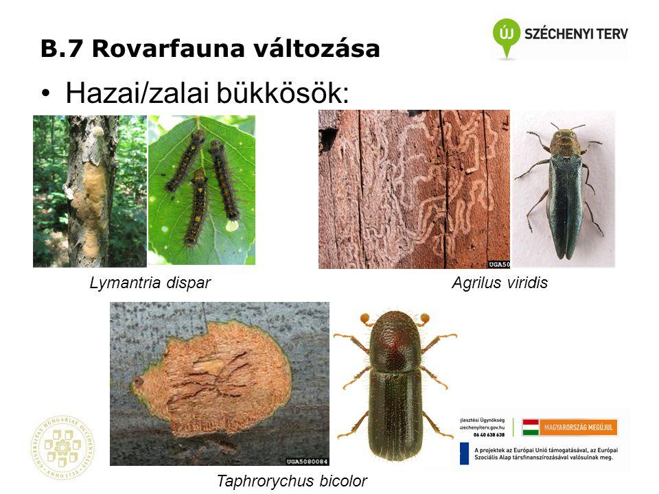 B.7 Rovarfauna változása •Hazai/zalai bükkösök: Taphrorychus bicolor Agrilus viridisLymantria dispar