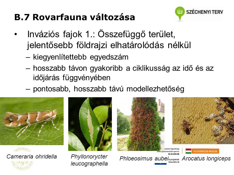 B.7 Rovarfauna változása •Inváziós fajok 1.: Összefüggő terület, jelentősebb földrajzi elhatárolódás nélkül –kiegyenlítettebb egyedszám –hosszabb távo