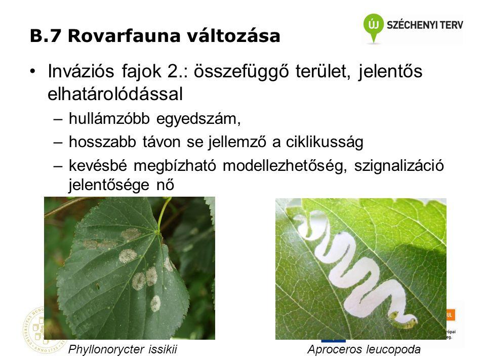 B.7 Rovarfauna változása •Inváziós fajok 2.: összefüggő terület, jelentős elhatárolódással –hullámzóbb egyedszám, –hosszabb távon se jellemző a ciklik