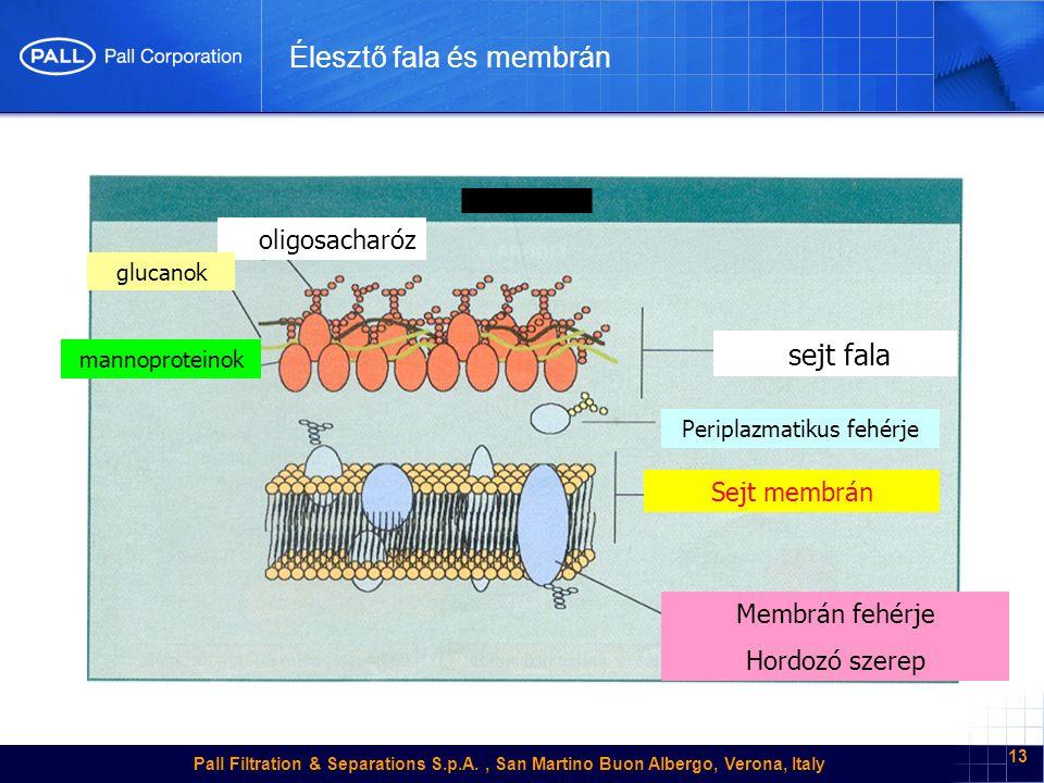 Pall Filtration & Separations S.p.A., San Martino Buon Albergo, Verona, Italy 13 Élesztő fala és membrán sejt fala oligosacharóz glucanok mannoproteinok Sejt membrán Membrán fehérje Hordozó szerep Periplazmatikus fehérje