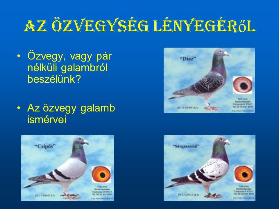 Az özvegység lényegér ő l •Özvegy, vagy pár nélküli galambról beszélünk? •Az özvegy galamb ismérvei