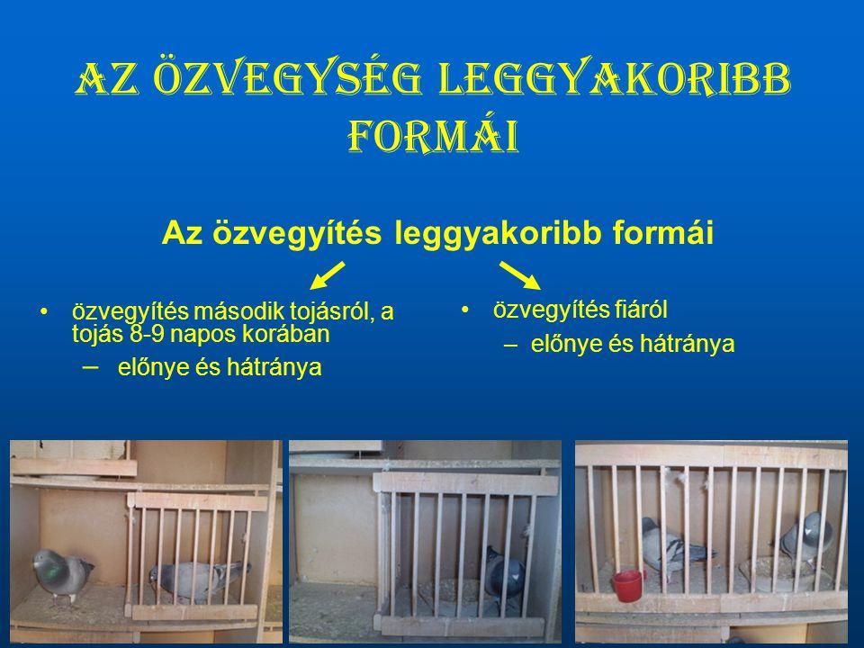 Az özvegység leggyakoribb formái •özvegyítés második tojásról, a tojás 8-9 napos korában – előnye és hátránya •özvegyítés fiáról –előnye és hátránya A