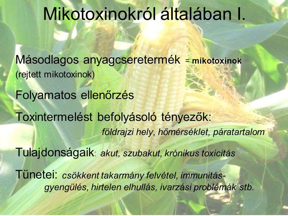 Másodlagos anyagcseretermék = mikotoxinok (rejtett mikotoxinok) Folyamatos ellenőrzés Toxintermelést befolyásoló tényezők: földrajzi hely, hőmérséklet