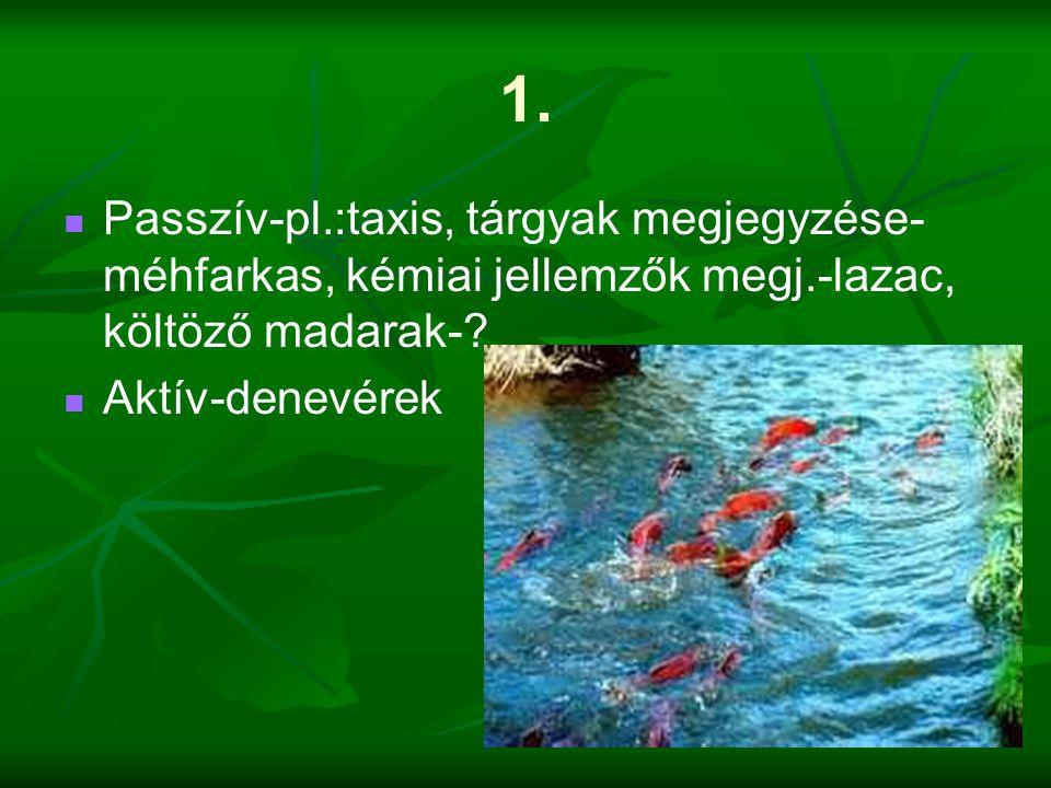 1.   Passzív-pl.:taxis, tárgyak megjegyzése- méhfarkas, kémiai jellemzők megj.-lazac, költöző madarak-?   Aktív-denevérek