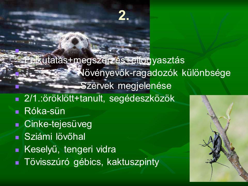 2.   Felkutatás+megszerzés+elfogyasztás   Növényevők-ragadozók különbsége   Szervek megjelenése   2/1.:öröklött+tanult, segédeszközök   Róka