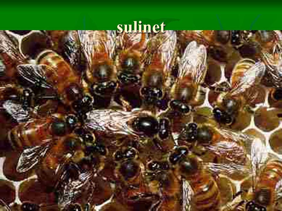 sulinet
