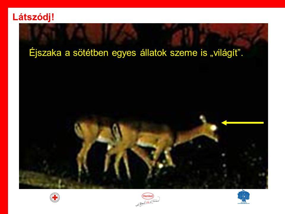 """· Éjszaka a sötétben egyes állatok szeme is """"világít . Látszódj!"""