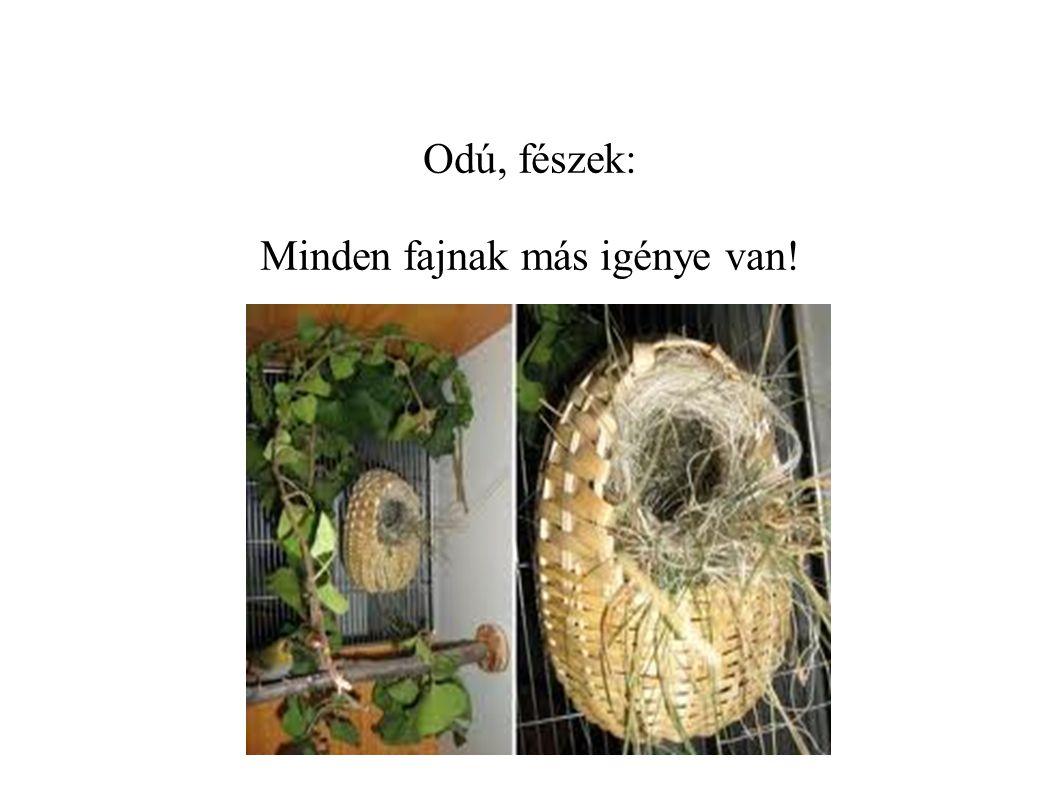 Odú, fészek: Minden fajnak más igénye van!