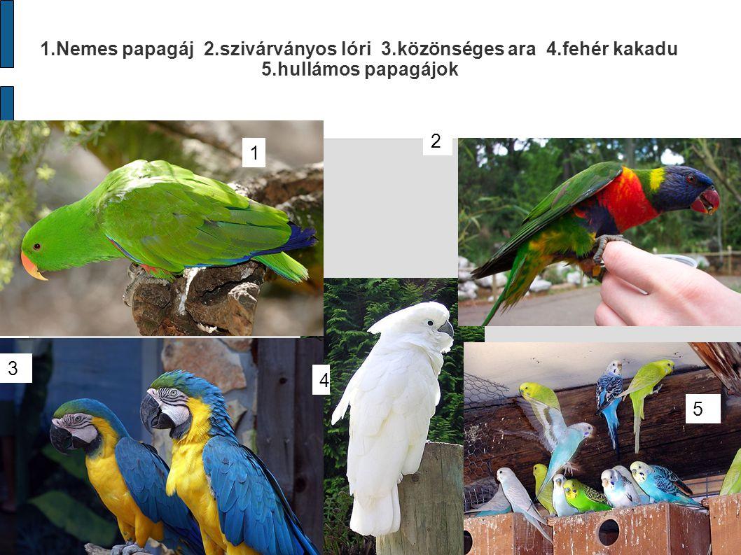 1.Nemes papagáj 2.szivárványos lóri 3.közönséges ara 4.fehér kakadu 5.hullámos papagájok 1 2 3 4 5