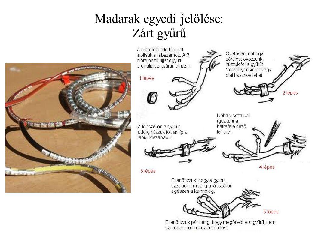 Madarak egyedi jelölése: Zárt gyűrű
