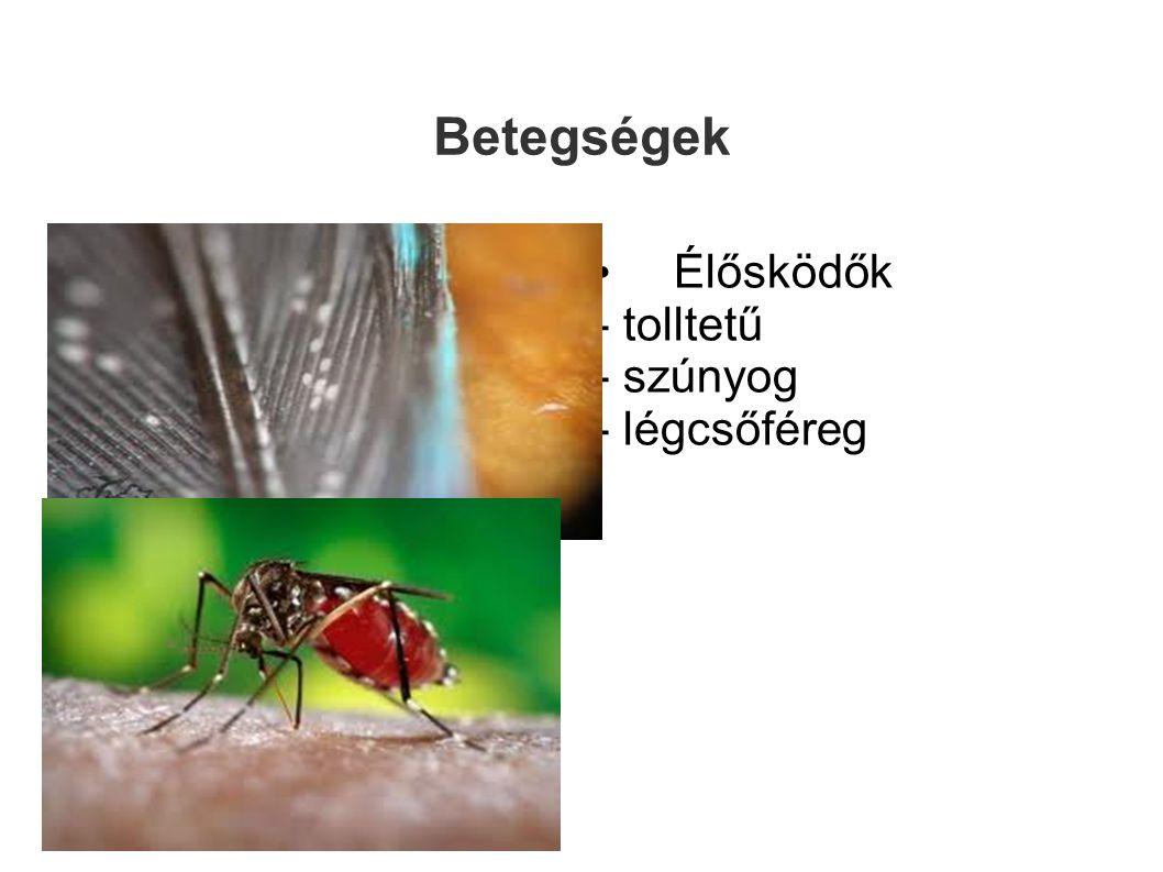 Betegségek • Élősködők - tolltetű - szúnyog - légcsőféreg