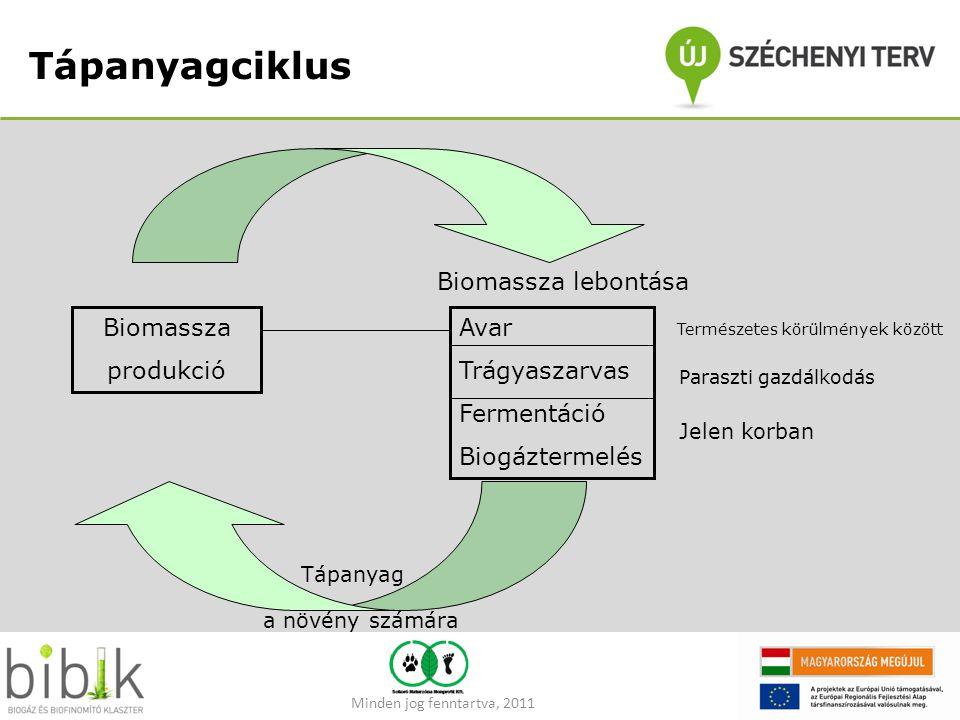 Tápanyagciklus Biomassza produkció Avar Trágyaszarvas Fermentáció Biogáztermelés Biomassza lebontása Természetes körülmények között Paraszti gazdálkod