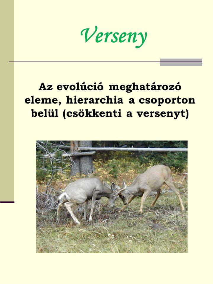 Verseny Az evolúció meghatározó eleme, hierarchia a csoporton belül (csökkenti a versenyt)
