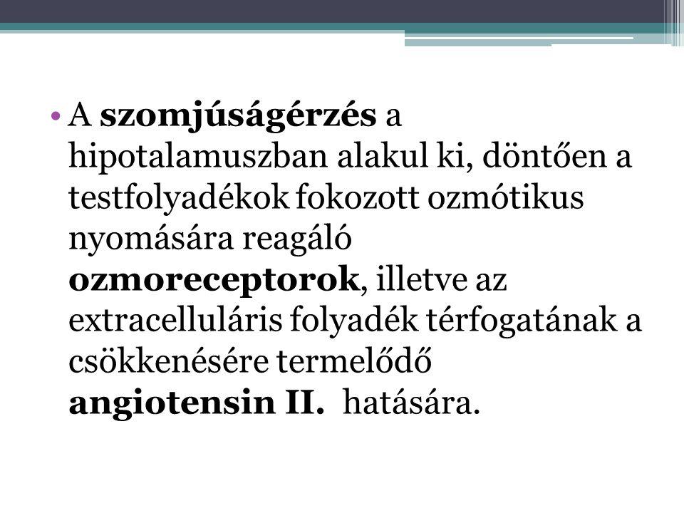 •A szomjúságérzés a hipotalamuszban alakul ki, döntően a testfolyadékok fokozott ozmótikus nyomására reagáló ozmoreceptorok, illetve az extracellulári
