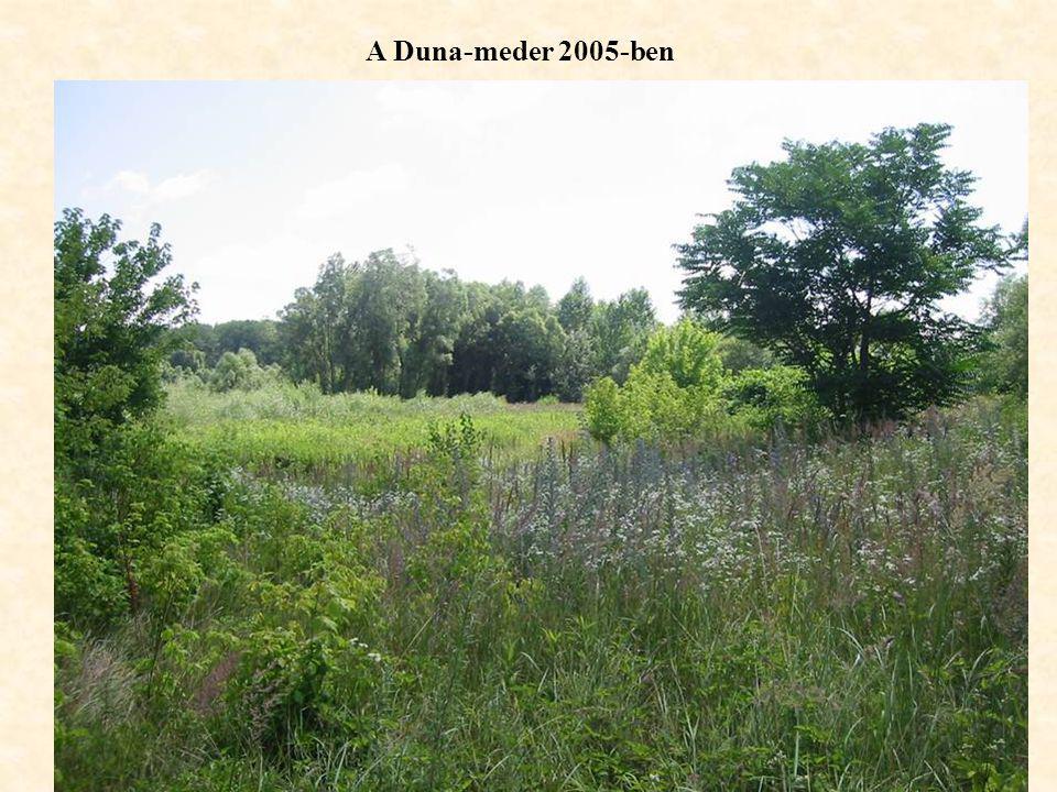 A Duna-meder 2005-ben