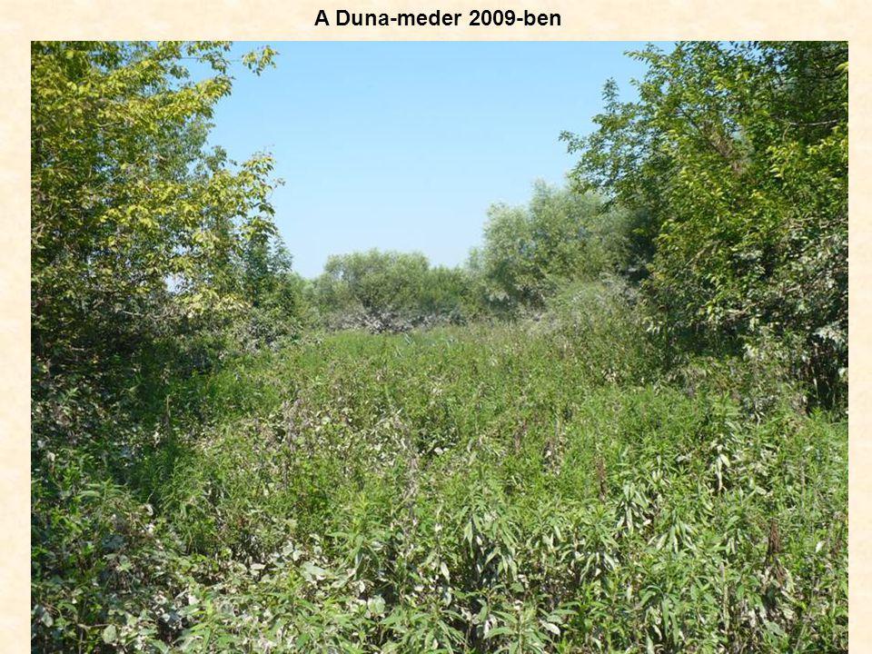 A Duna-meder 2009-ben