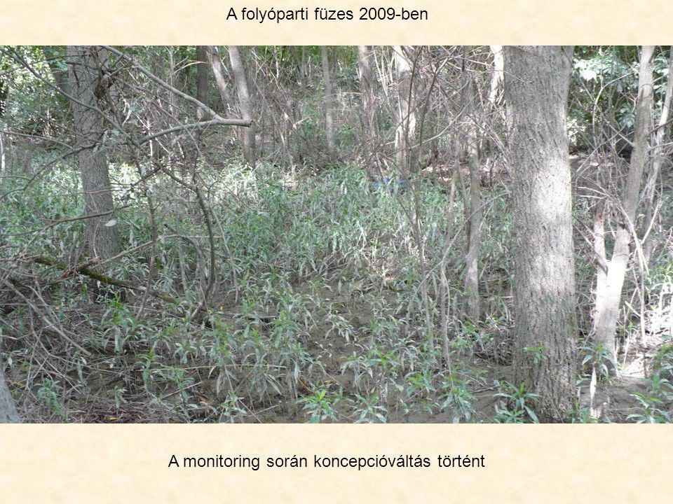 A folyóparti füzes 2009-ben A monitoring során koncepcióváltás történt